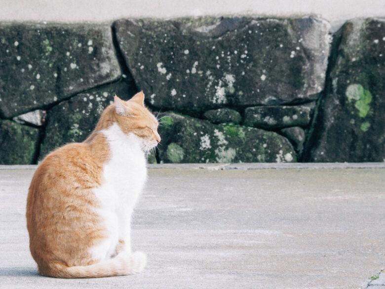 ステ 匠 猫 m 北村 海